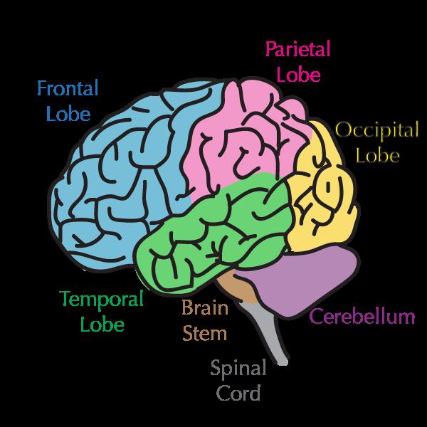 Brain 101 Reality Bites