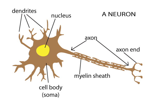 The snappy synapse reality bites neuron diagram ccuart Images