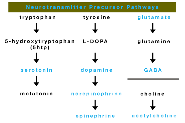 neurotransmitter percursor chart